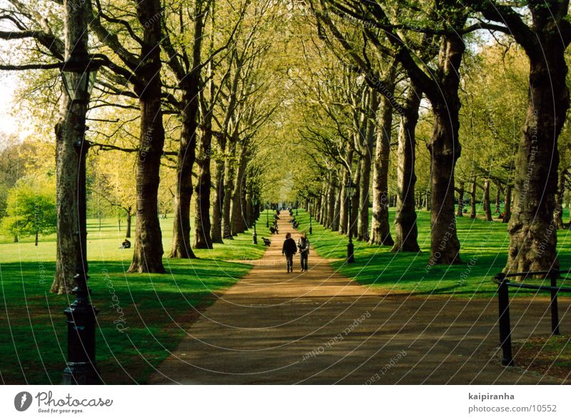 Walk along the Hyde Park Buckingham Palace Tree Grass Meadow Green Going To go for a walk Flower Air Relaxation Sun Shadow Lanes & trails Human being Nature