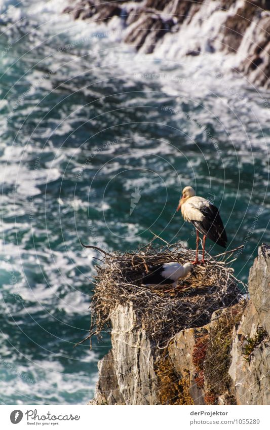 Nesting storks on rocks Vacation & Travel Tourism Trip Adventure Far-off places Freedom Environment Nature Landscape Plant Elements Summer Beautiful weather