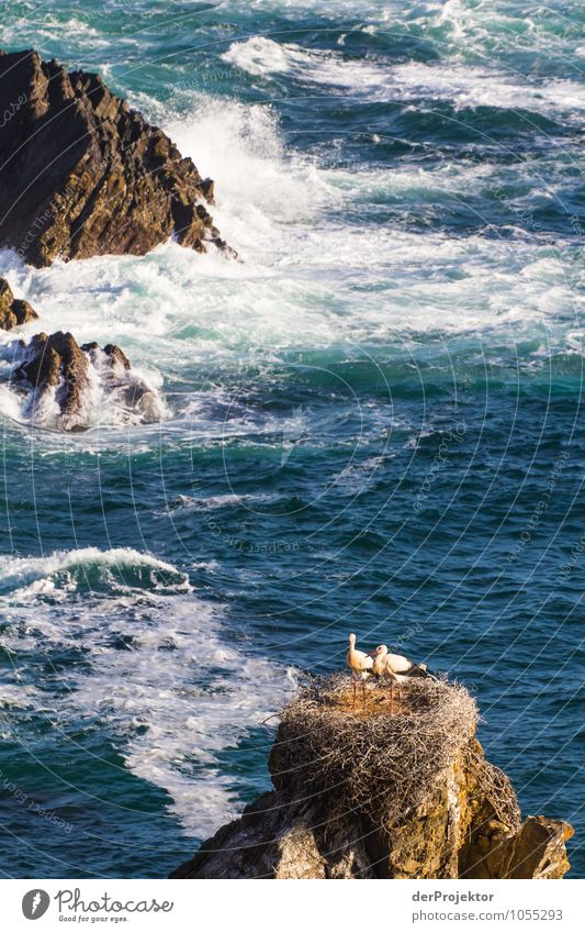 Storks nest on the Portuguese coast Environment Nature Landscape Plant Animal Elements Summer Beautiful weather Rock Waves Coast Beach Bay Reef Ocean