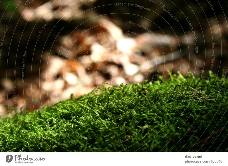 Nothing goes on without moss Green Damp Brown Environmental protection Fresh Autumn Depth of field Blur Structures and shapes Harmonious Soft Relaxation Physics