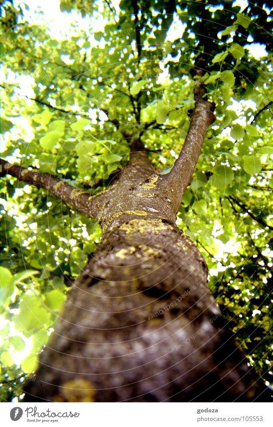 Nature Tree Green Summer Leaf Animal Life Spring Warmth Brown Bird Environment Sleep Trip Fresh Perspective