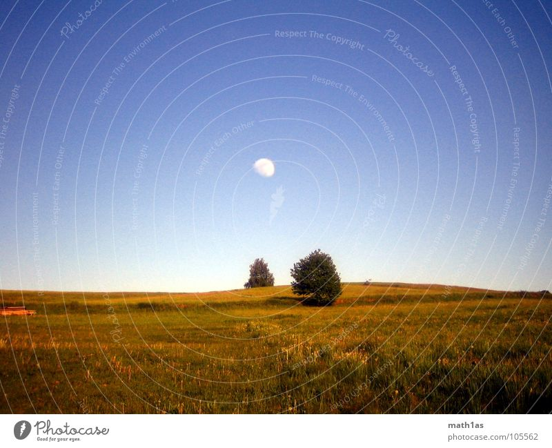 Tree Blue Summer Yellow Autumn Meadow Grass Large Hill Moon
