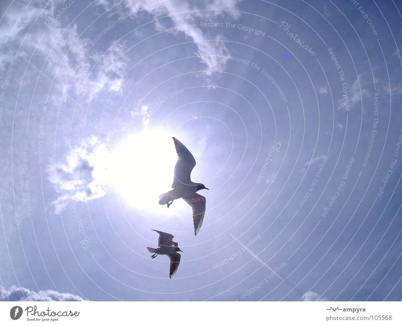 Sky Sun Summer Bird Flying Seagull Ease Visual spectacle