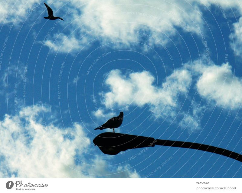 Sky Blue Vacation & Travel Animal Far-off places Lamp Relaxation Freedom Bird Sit Aviation Lie Canada Street lighting