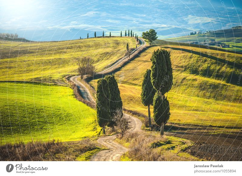 Cypress trees road Nature Vacation & Travel Blue Beautiful Green Summer Sun Tree Landscape House (Residential Structure) Yellow Street Meadow Grass Spring Happy