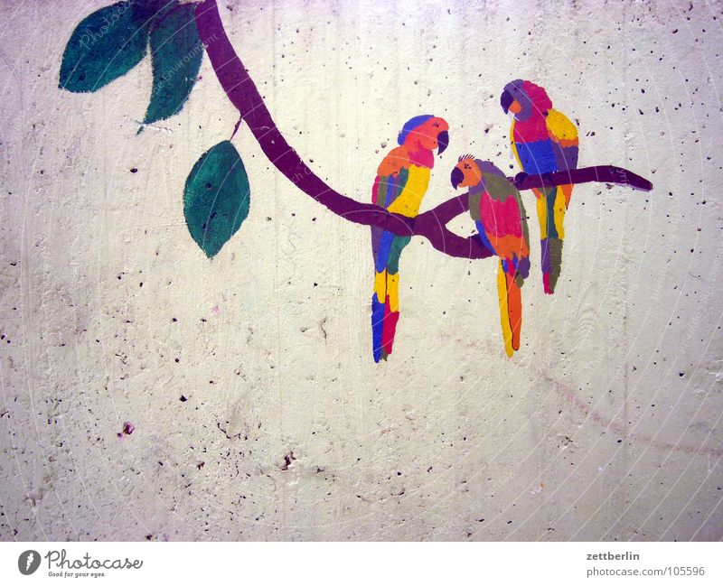 Wall (building) Bird Concrete Decoration Branch Painting and drawing (object) Virgin forest Exotic Drawing Parrots Alaska Wall decoration Children's drawing Fine Art Freedom of panorama