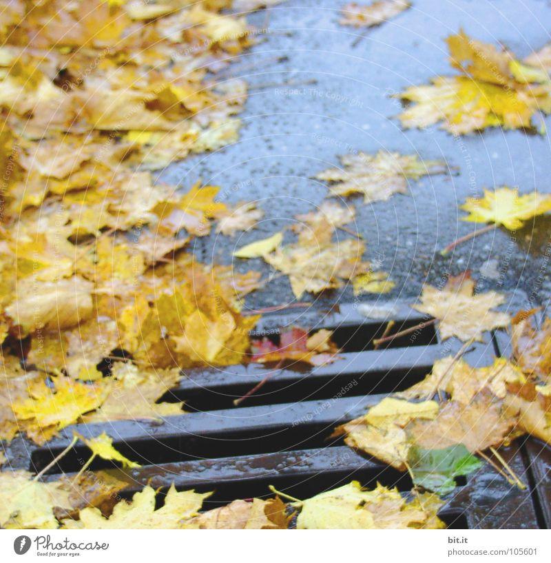 slip hazard Leaf Gully Yellow Deep Wet Autumn Winter Cold Drainage system Traffic infrastructure Street Blue
