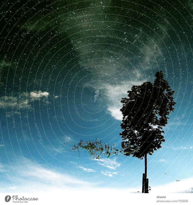 Water Sky White Tree Blue Plant Calm Black Clouds Loneliness Street Dark Rain Graffiti Bright Stars