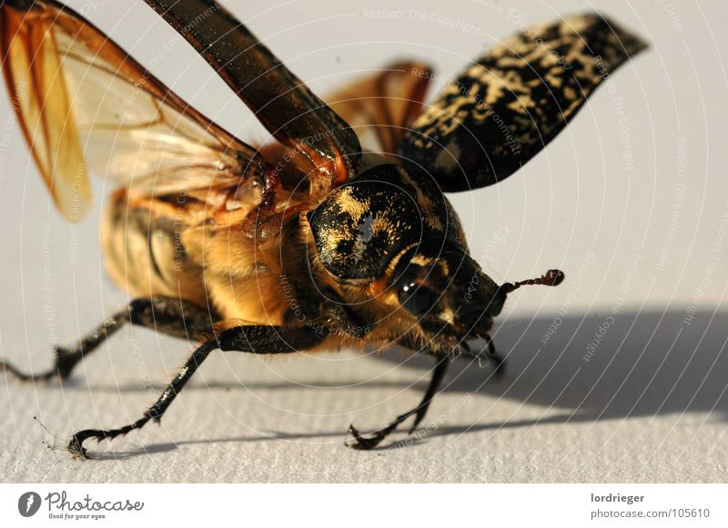 Nature Beach Eyes Emotions Flying Wing Insect Beetle Crawl Feeler Judder Unable to fly
