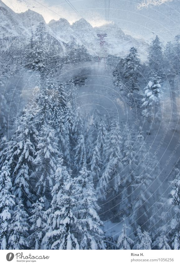 Nature Vacation & Travel Landscape Clouds Winter Forest Cold Environment Mountain Snow Natural Horizon Ice Trip Vantage point Joie de vivre (Vitality)