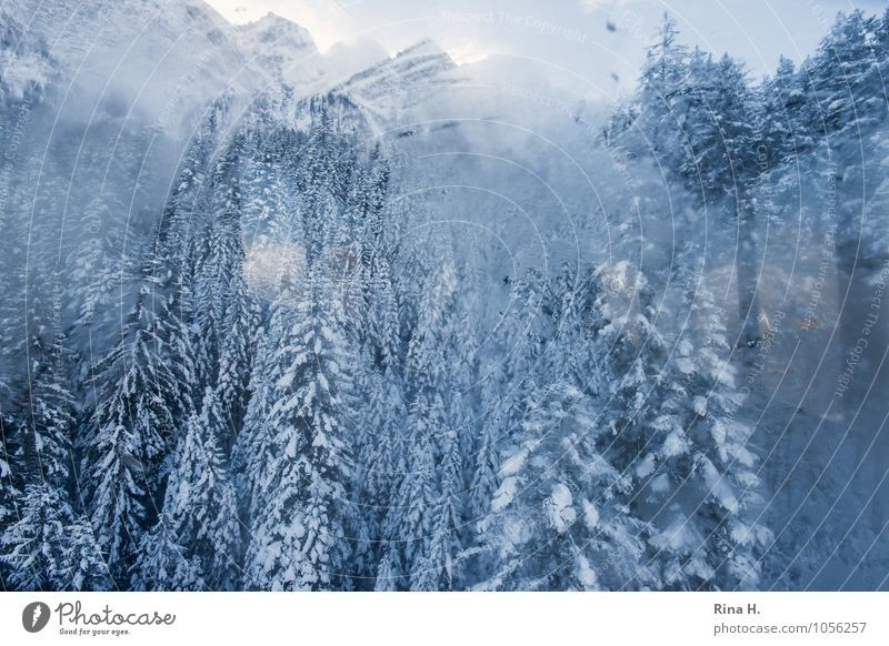 downwards Vacation & Travel Environment Landscape Winter Snow Tree Forest Alps Mountain Cold Pane Downward Window pane Gondola Vantage point Misted up Fir tree