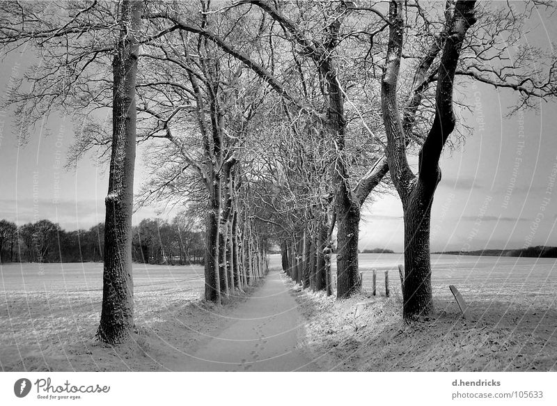 Winter silence Nature trees snow street black white footsteps