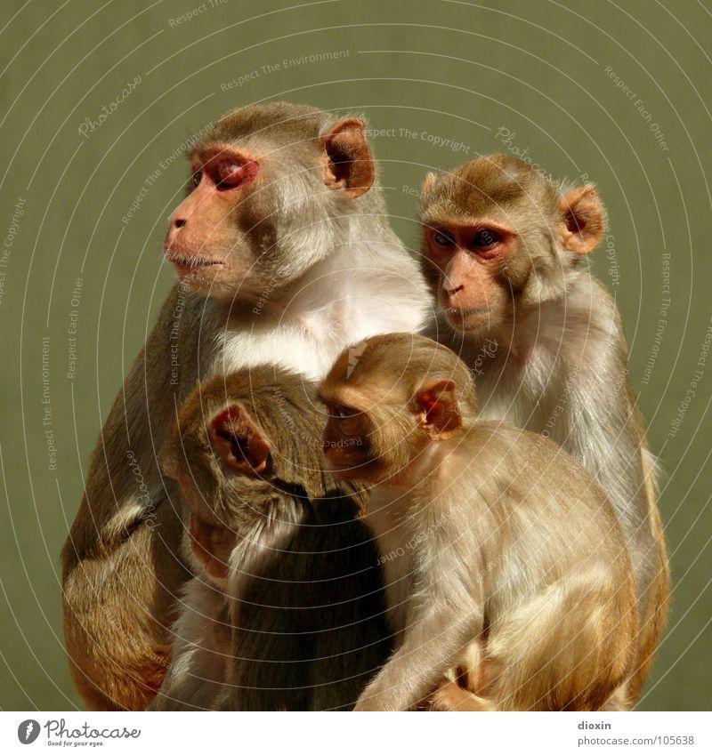 Nature Relaxation Animal Baby animal Environment Wild animal Wait Serene Pelt Animal face Zoo Mammal China India Captured Monkeys