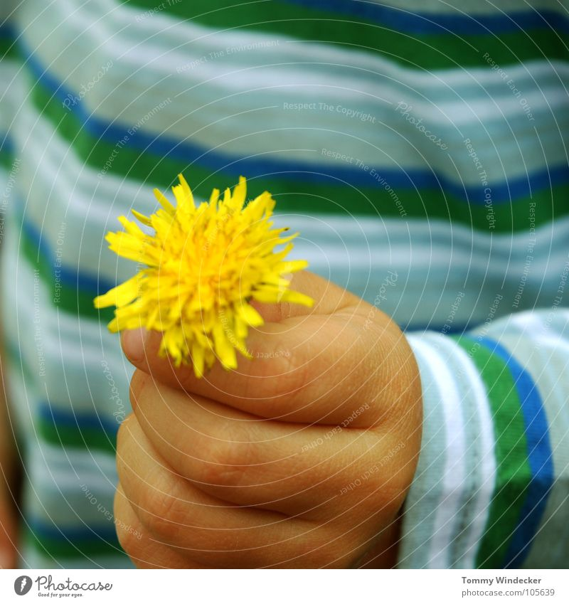 flower child Childlike Playing Flower Dandelion Plant Hand Children`s hand Fingers Yellow Curiosity Investigate Mother's Day Gift Donate Motherly love