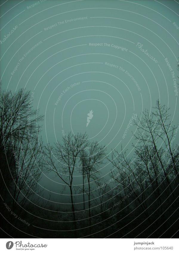in the schlumperwald Fog Tree Autumn Horizon Winter Cold Dark Mystic Transience Sky Silhouette Twig