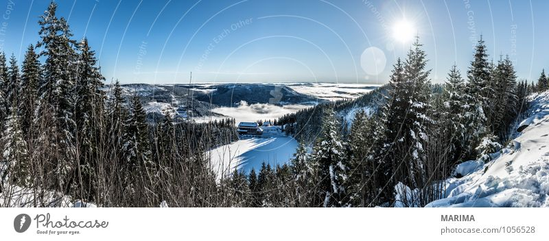 Nature White Sun Tree Landscape Calm Clouds Winter Black Forest Cold Environment Mountain Gray Germany Tourism