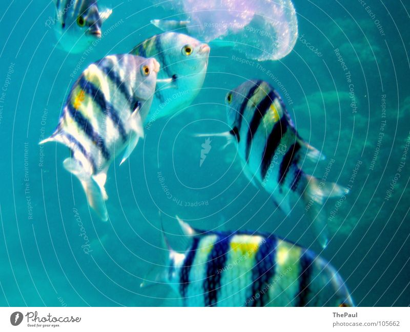 Water Ocean Blue Movement Fish Action Appetite Transparent Flexible Aggression Barn Striped Jellyfish