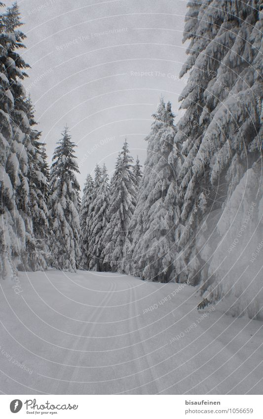 cross-country skiing trail Sports Winter sports Nature Landscape Ice Frost Snow Tree Forest Lanes & trails Loneliness Cross country skiing Skiing Ski resort