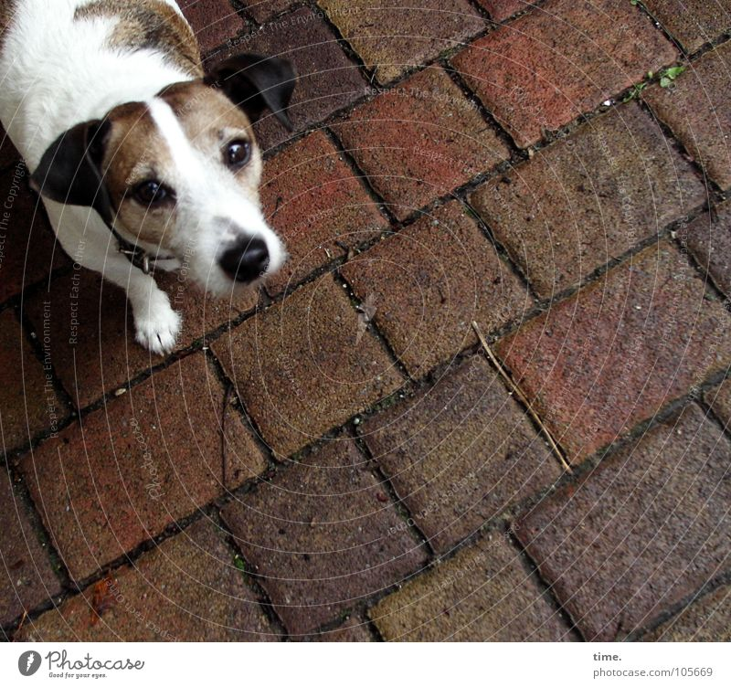 Dog White Stone Brown Longing Trust Tile Services Mammal Snout Elapse Animal Crossbreed Dog's snout Squint