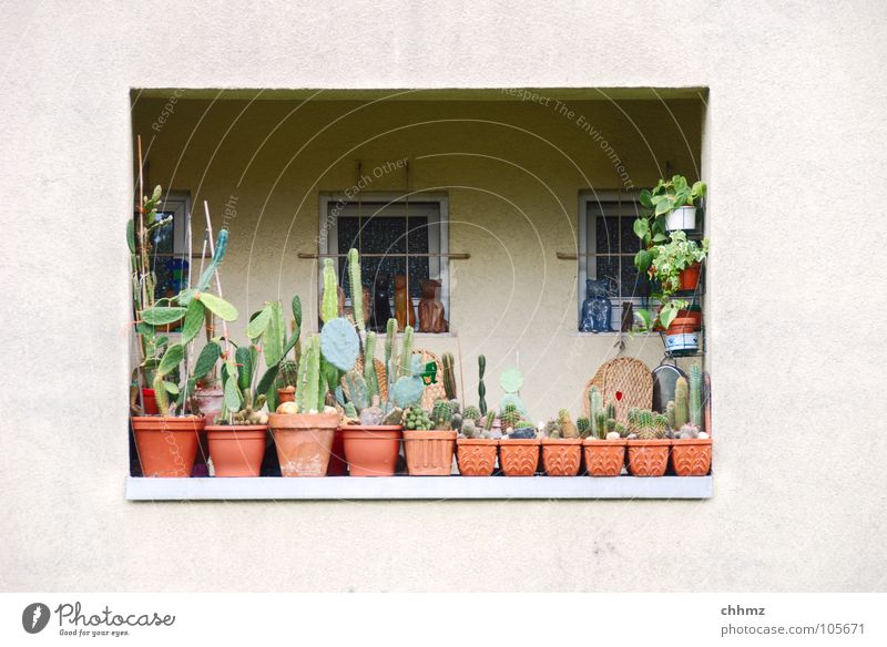 Balconies I Loggia Balcony Vacation & Travel Flowerpot Window Shadowy existence Cactus Handrail Looking Facade Flat (apartment) Plaster Idyll Decoration Gloomy