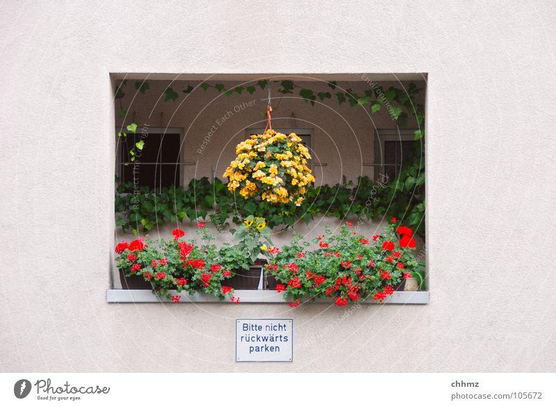 Flower Vacation & Travel Window Blossom Flat (apartment) Facade Gloomy Decoration Living or residing Idyll Balcony Handrail Traffic light Plaster Cactus Hiding place