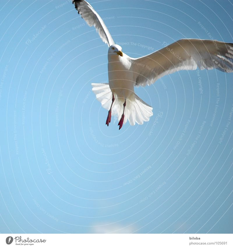Sky Blue Vacation & Travel White Beautiful Animal Black Freedom Bird Flying Elegant Tall Trip Airplane Infinity