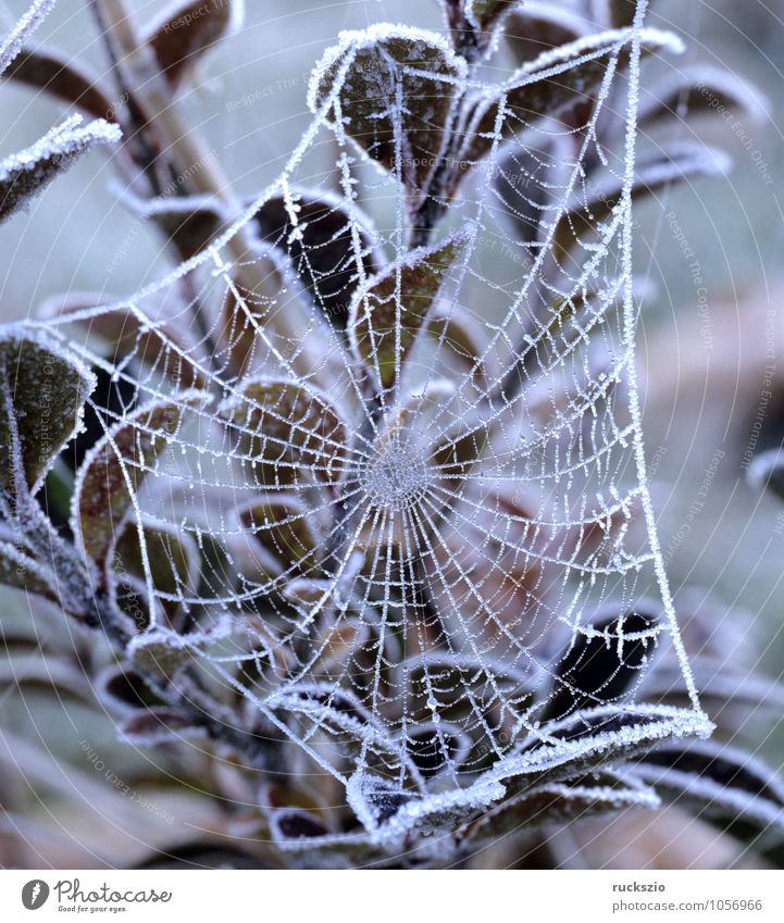 spider web, hoarfrost Winter Fog Spider Net Esthetic cobweb Hoar frost Snow thread netting Spider's web Spin spider webs cobwebs Colour photo Exterior shot