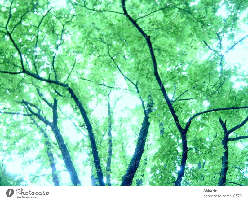 press Leaf Leaf canopy Tree trunk Forest Branch