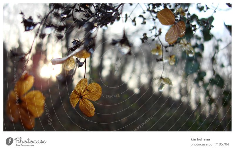 Old Sun Winter Leaf Yellow Forest Cold Autumn Blossom Earth Transience Delicate Derelict Transparent Visual spectacle