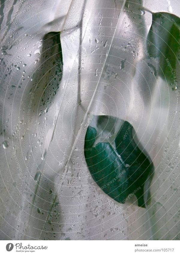 Water Green Plant Leaf Drops of water Science & Research Damp Greenhouse Fig Ficus benjamina