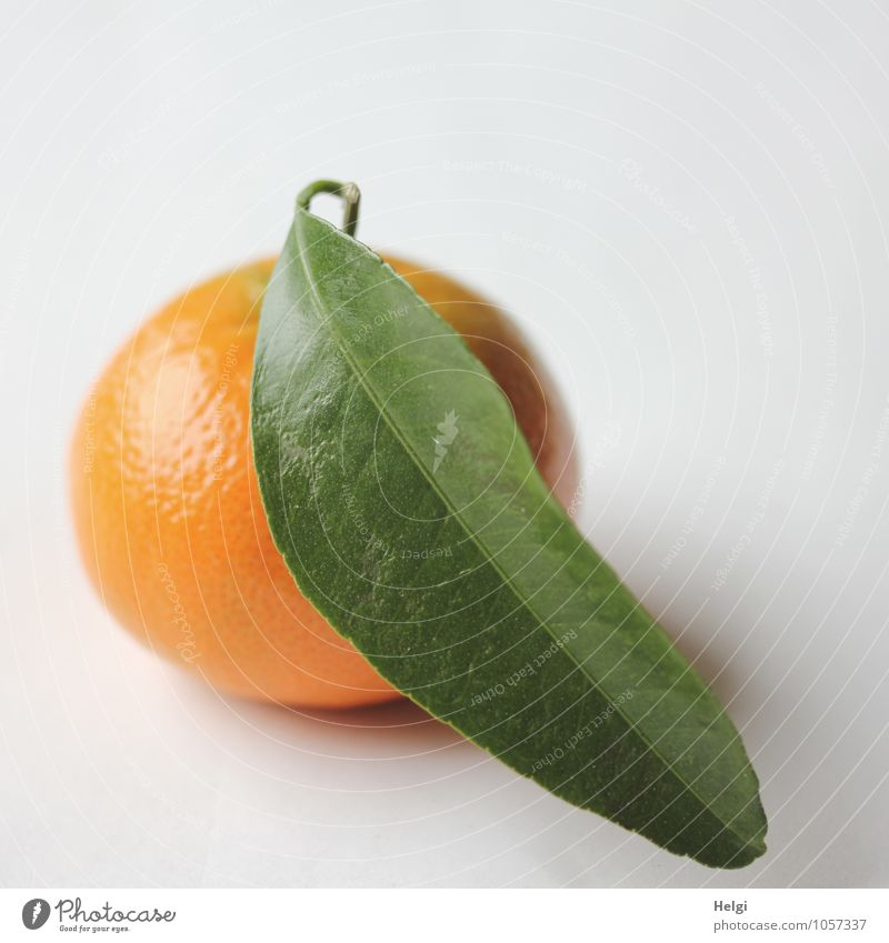 fasting Food Fruit Tangerine Nutrition Organic produce Vegetarian diet Leaf Lie Simple Fresh Healthy Delicious Natural Round Sweet Green Orange White