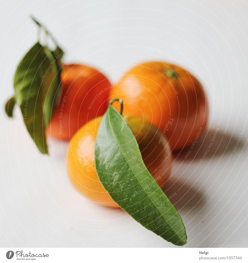 vitaminic Food Fruit Tangerine Nutrition Organic produce Vegetarian diet Leaf Lie Esthetic Fresh Healthy Delicious Natural Round Sweet Green Orange White
