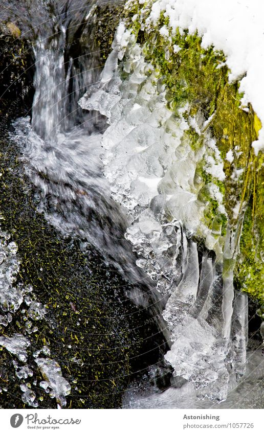 Nature Plant Green White Water Landscape Winter Black Cold Environment Snow Grass Stone Bright Ice Weather