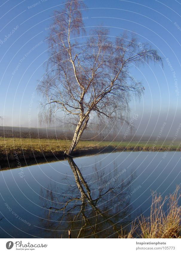 Mirror, mirror ... Sky Water Tree Leaf Clouds Autumn Landscape Grass Lake Field Fog Branch Clarity Tree trunk Twig