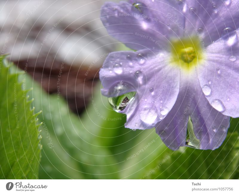 Nature Blue Plant Green Flower Leaf Spring Natural Garden Growth Drops of water Wet Blossoming Uniqueness Clean Hope