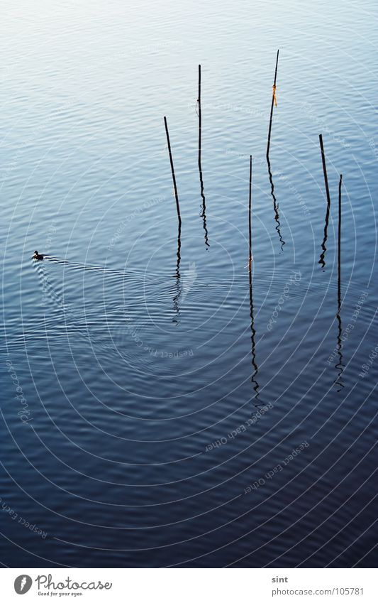 Nature Water Old Blue Calm Animal Relaxation Lake Bird River Peace Simple Serene Brook Stick
