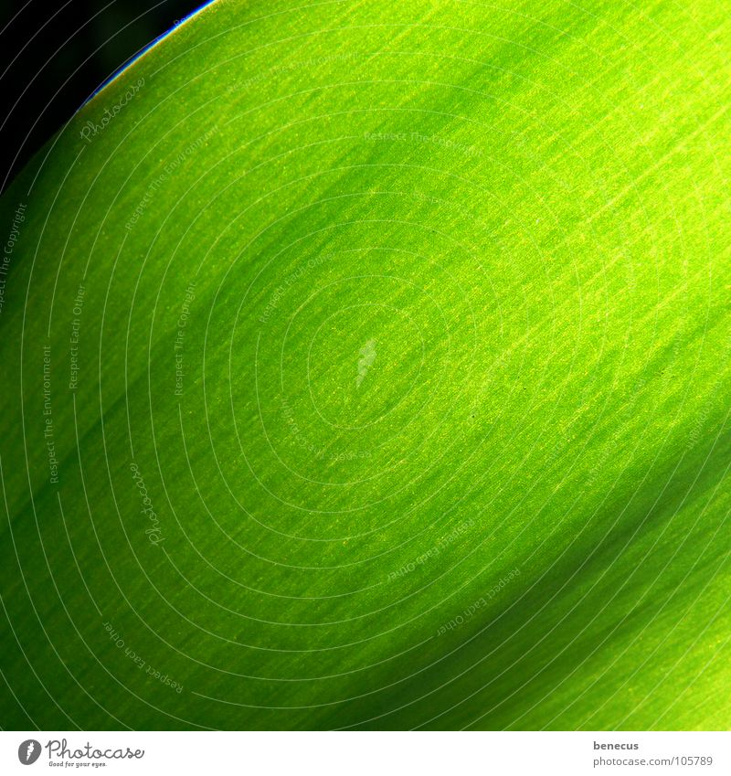 chlorophyll Green Bright green Bilious green Thread Vessel Progress Fresh Light Near Plant Verdant Environment Structures and shapes Photosynthesis Spring
