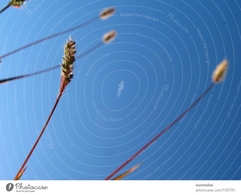 Sky Blue Ocean Grass Clean Stalk Deep Fishing rod Cross