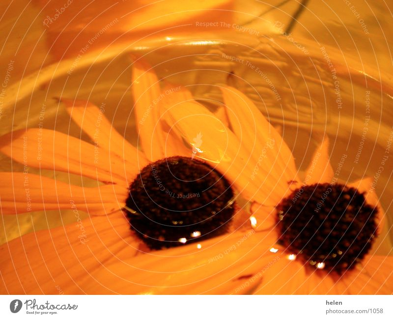 flowery Flower Photographic technology decorations