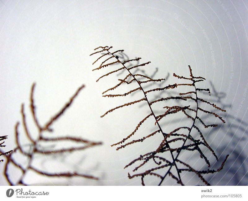 sonnet Beautiful Decoration To dry up Thin Authentic Simple Elegant Together Small Near Natural Many Crazy Bizarre Delicate Graceful Twig dry branch dry plant
