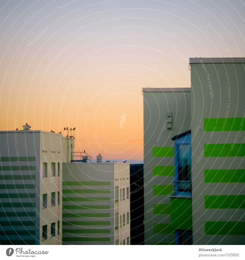 Sun Blue Orange Bird Germany Concrete High-rise Modern Romance GDR Wanderlust Chic Prefab construction Potsdam