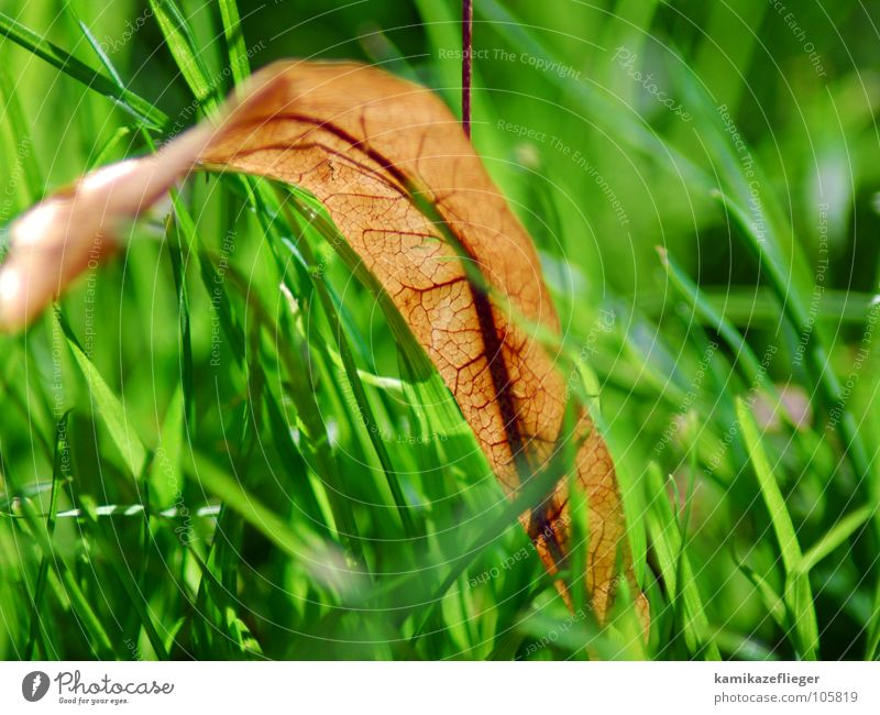 Green Leaf Yellow Autumn Meadow Death Grass Blood Vessel