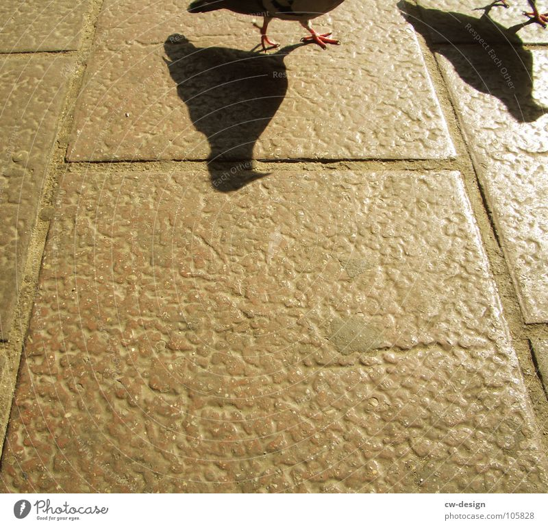 Bird Pair of animals In pairs Pigeon Graphic Claw Section of image Partially visible Paving tiles Stone slab
