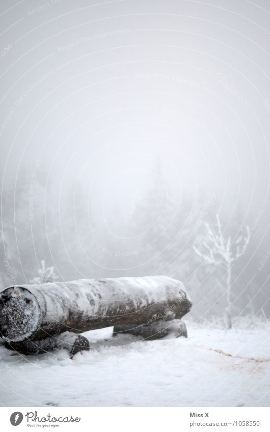 Cold in the forest Environment Nature Winter Weather Bad weather Fog Ice Frost Snow Snowfall Forest Wood Old Park bench Winter vacation Winter mood Hiking
