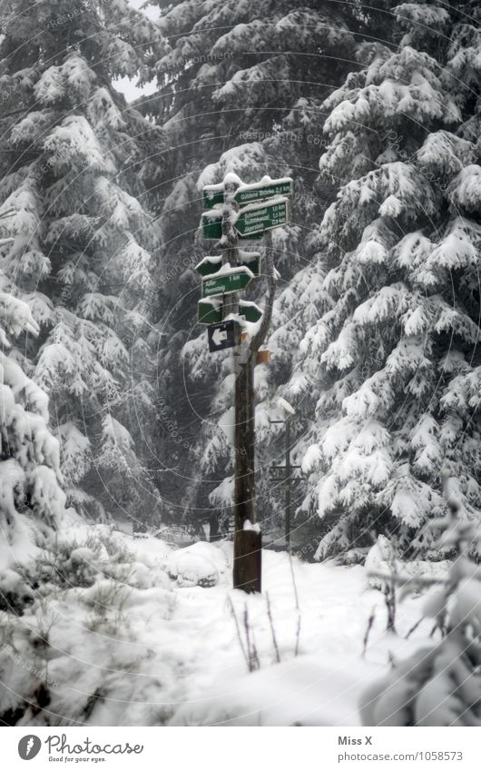 Tree Loneliness Winter Forest Cold Lanes & trails Snow Moody Tourism Leisure and hobbies Snowfall Weather Ice Trip Hiking Gloomy
