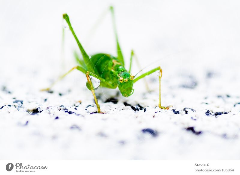 water battle Green Drops of water Insect Animal Living thing Locust Macro (Extreme close-up)