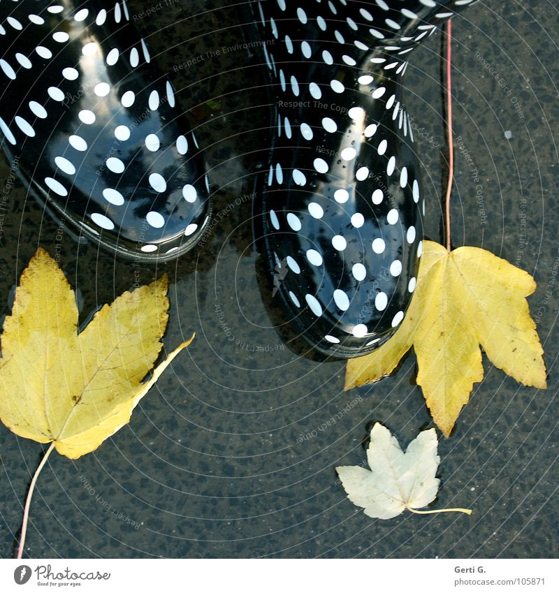 Is it autumn already? Autumn Leaf Autumn leaves To fall Yellow Puddle Wet Boots Rubber boots Spotted White Black Glittering Happiness Multicoloured Asphalt