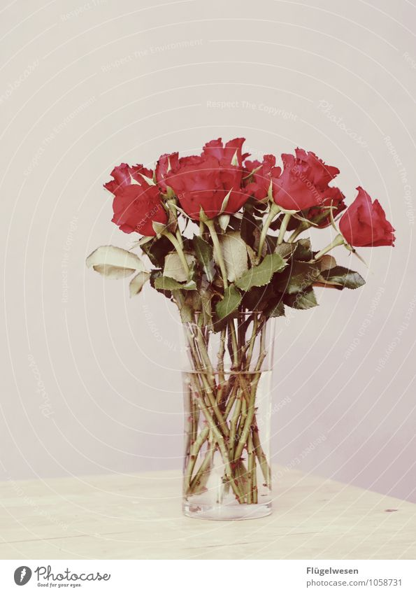 Happy Wedding Day Wedding anniversary Flower Plant Flower vase Still Life Blossoming Fragrance Odor Thorn Rose
