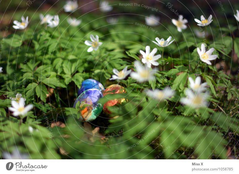 Easter eggs Food Nutrition Spring Flower Leaf Blossom Garden Multicoloured Wood anemone Woodground Flower meadow Easter egg nest Nest Egg Hen's egg Colour Hide