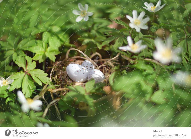 Hidden Easter Plant Animal Spring Flower Leaf Blossom Meadow Bird Baby animal Protection Safety (feeling of) Warm-heartedness Nest Eyrie Easter egg nest Egg